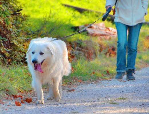 passeggiata cane