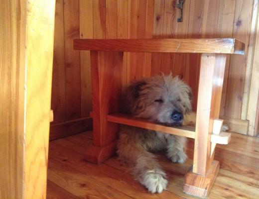 Piero e il dog sitter
